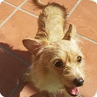 Terrier (Unknown Type, Medium) Dog for adoption in Lithia, Florida - Urgent foster needed