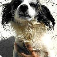 Adopt A Pet :: Beau-ADOPTION PENDING - Boulder, CO