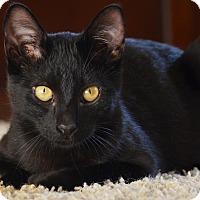 Adopt A Pet :: Robin - El Dorado Hills, CA