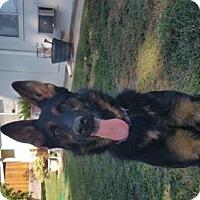 Adopt A Pet :: Reba - Yucaipa, CA