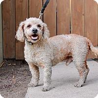 Adopt A Pet :: Fozzie - Los Angeles, CA