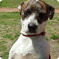 Adopt A Pet :: Mia - Southbury, CT