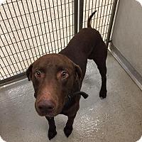Adopt A Pet :: Branson - Humble, TX