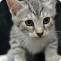 Adopt A Pet :: Garfield (JAYDER)161687 - Atlanta, GA