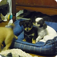 Adopt A Pet :: ZOEY, MIMI - Greenville, OH