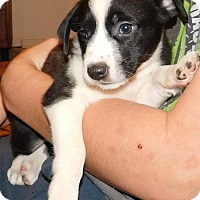 Adopt A Pet :: Milly - Von Ormy, TX