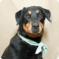 Adopt A Pet :: Cora - Tracy, CA