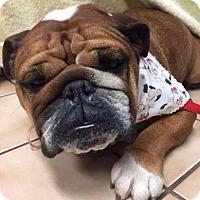 Adopt A Pet :: Chloromenite - Pittsburg, CA