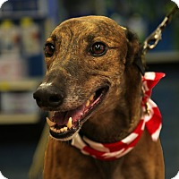 Adopt A Pet :: Clutch - Brandon, FL