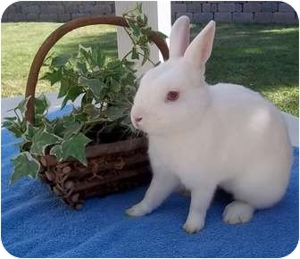 Dwarf Mix for adoption in Bonita, California - Happy