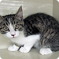 Adopt A Pet :: Pushka - Riverhead, NY