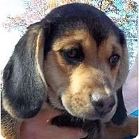 Adopt A Pet :: Wamo - Allentown, PA