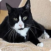 Adopt A Pet :: Bubba - Lancaster, MA
