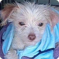 Adopt A Pet :: Buddy III - Culver City, CA