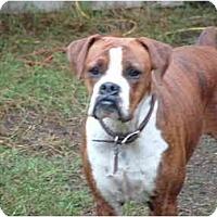 Adopt A Pet :: Collina - Julian, NC