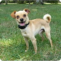 Adopt A Pet :: Carlos - Mocksville, NC