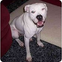 Adopt A Pet :: Roadie - Navarre, FL