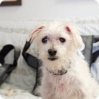 Adopt A Pet :: Einstein - Homewood, AL