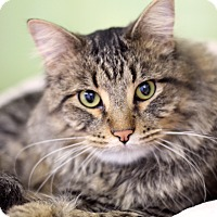 Adopt A Pet :: Pierotte - Chicago, IL