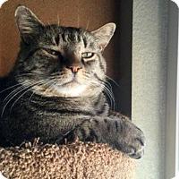 Adopt A Pet :: SAMUEL - Sacramento, CA