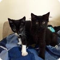 Adopt A Pet :: Kittens - Kingwood, TX