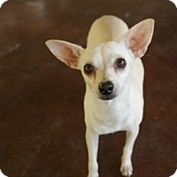 Adopt A Pet :: Jenny - San Antonio, TX