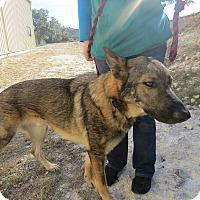 Adopt A Pet :: MURPHY - SAN ANTONIO, TX