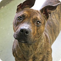 Adopt A Pet :: MARIAH - Cleveland, MS