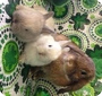 Other/Unknown Mix for adoption in Paramount, California - Mommy