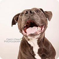 Adopt A Pet :: Buddy - Gainesville, VA
