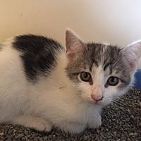 Adopt A Pet :: Penny - Bronx, NY