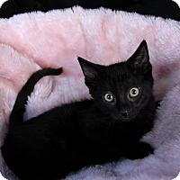 Adopt A Pet :: SYDNEY - Newport Beach, CA