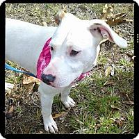 Adopt A Pet :: Roxy - Princeton, KY
