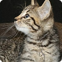 Adopt A Pet :: Joseph - Rochester, NY