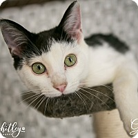 Adopt A Pet :: Gilligan - Columbia, TN