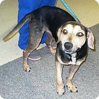 Adopt A Pet :: Spam - Eastpoint, FL