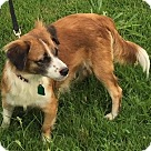 Adopt A Pet :: Tanya