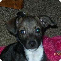 Adopt A Pet :: BARKLEY - EASTPOINTE, MI