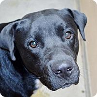 Adopt A Pet :: Buzz - San Jacinto, CA