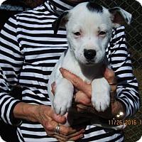 Adopt A Pet :: EMMETT - Oswego, NY