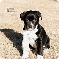 Adopt A Pet :: Frankie - oklahoma city, OK