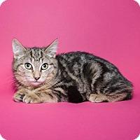 Adopt A Pet :: Chipmunk - Jersey City, NJ
