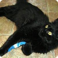 Adopt A Pet :: JUNIPER MASON FLORIST - Hampton, VA