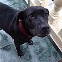 Adopt A Pet :: Lucy - BONITA, CA