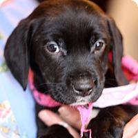 Adopt A Pet :: Riley - West Grove, PA