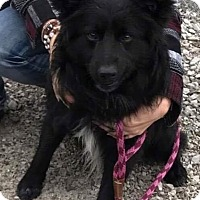 Adopt A Pet :: FLUFF - Toronto, ON