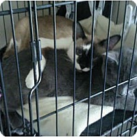 Adopt A Pet :: Timmy - Jacksonville, FL