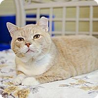Adopt A Pet :: Sandy - St. Charles, MO