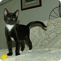 Adopt A Pet :: Muriel - Ocala, FL