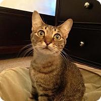 Adopt A Pet :: Bonnie - Modesto, CA